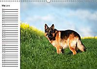 Deutsche Schäferhunde - Senioren auf vier Pfoten (Wandkalender 2019 DIN A3 quer) - Produktdetailbild 5