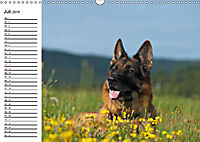 Deutsche Schäferhunde - Senioren auf vier Pfoten (Wandkalender 2019 DIN A3 quer) - Produktdetailbild 7