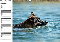 Deutsche Schäferhunde - Senioren auf vier Pfoten (Wandkalender 2019 DIN A3 quer) - Produktdetailbild 6