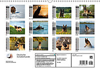 Deutsche Schäferhunde - Senioren auf vier Pfoten (Wandkalender 2019 DIN A3 quer) - Produktdetailbild 13