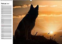 Deutsche Schäferhunde - Senioren auf vier Pfoten (Wandkalender 2019 DIN A2 quer) - Produktdetailbild 2