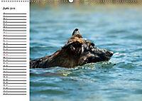 Deutsche Schäferhunde - Senioren auf vier Pfoten (Wandkalender 2019 DIN A2 quer) - Produktdetailbild 6