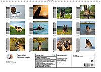 Deutsche Schäferhunde - Senioren auf vier Pfoten (Wandkalender 2019 DIN A2 quer) - Produktdetailbild 13