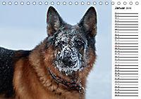 Deutsche Schäferhunde - Traumhunde (Tischkalender 2019 DIN A5 quer) - Produktdetailbild 1