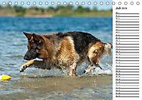 Deutsche Schäferhunde - Traumhunde (Tischkalender 2019 DIN A5 quer) - Produktdetailbild 7