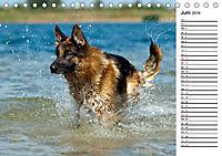 Deutsche Schäferhunde - Traumhunde (Tischkalender 2019 DIN A5 quer) - Produktdetailbild 6