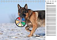 Deutsche Schäferhunde - Traumhunde (Tischkalender 2019 DIN A5 quer) - Produktdetailbild 2