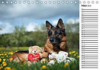 Deutsche Schäferhunde - Traumhunde (Tischkalender 2019 DIN A5 quer) - Produktdetailbild 3