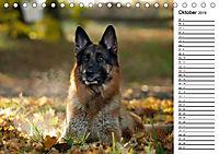 Deutsche Schäferhunde - Traumhunde (Tischkalender 2019 DIN A5 quer) - Produktdetailbild 10