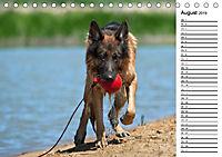 Deutsche Schäferhunde - Traumhunde (Tischkalender 2019 DIN A5 quer) - Produktdetailbild 8