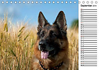 Deutsche Schäferhunde - Traumhunde (Tischkalender 2019 DIN A5 quer) - Produktdetailbild 9