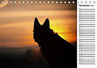 Deutsche Schäferhunde - Traumhunde (Tischkalender 2019 DIN A5 quer) - Produktdetailbild 11