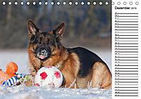 Deutsche Schäferhunde - Traumhunde (Tischkalender 2019 DIN A5 quer) - Produktdetailbild 12
