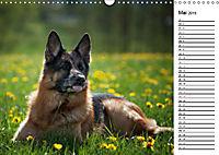 Deutsche Schäferhunde - Traumhunde (Wandkalender 2019 DIN A3 quer) - Produktdetailbild 5