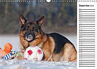 Deutsche Schäferhunde - Traumhunde (Wandkalender 2019 DIN A3 quer) - Produktdetailbild 12