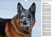 Deutsche Schäferhunde - Traumhunde (Wandkalender 2019 DIN A4 quer) - Produktdetailbild 1
