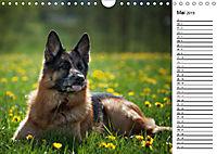Deutsche Schäferhunde - Traumhunde (Wandkalender 2019 DIN A4 quer) - Produktdetailbild 5
