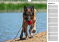 Deutsche Schäferhunde - Traumhunde (Wandkalender 2019 DIN A4 quer) - Produktdetailbild 8