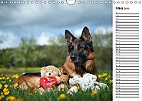 Deutsche Schäferhunde - Traumhunde (Wandkalender 2019 DIN A4 quer) - Produktdetailbild 3