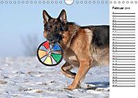 Deutsche Schäferhunde - Traumhunde (Wandkalender 2019 DIN A4 quer) - Produktdetailbild 2