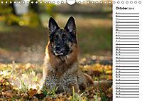 Deutsche Schäferhunde - Traumhunde (Wandkalender 2019 DIN A4 quer) - Produktdetailbild 10