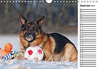 Deutsche Schäferhunde - Traumhunde (Wandkalender 2019 DIN A4 quer) - Produktdetailbild 12