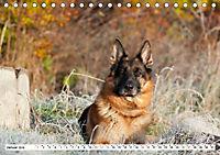 Deutsche Schäferhunde Unsere Graunasen (Tischkalender 2019 DIN A5 quer) - Produktdetailbild 1