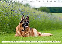 Deutsche Schäferhunde Unsere Graunasen (Tischkalender 2019 DIN A5 quer) - Produktdetailbild 6