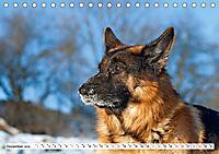 Deutsche Schäferhunde Unsere Graunasen (Tischkalender 2019 DIN A5 quer) - Produktdetailbild 12