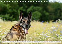 Deutsche Schäferhunde Unsere Graunasen (Tischkalender 2019 DIN A5 quer) - Produktdetailbild 4