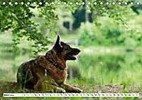 Deutsche Schäferhunde Unsere Graunasen (Tischkalender 2019 DIN A5 quer) - Produktdetailbild 3