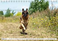 Deutsche Schäferhunde Unsere Graunasen (Tischkalender 2019 DIN A5 quer) - Produktdetailbild 8