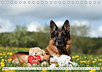 Deutsche Schäferhunde Unsere Graunasen (Tischkalender 2019 DIN A5 quer) - Produktdetailbild 7