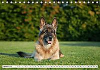 Deutsche Schäferhunde Unsere Graunasen (Tischkalender 2019 DIN A5 quer) - Produktdetailbild 10