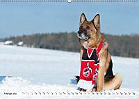 Deutsche Schäferhunde Unsere Graunasen (Wandkalender 2019 DIN A2 quer) - Produktdetailbild 2