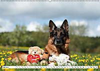 Deutsche Schäferhunde Unsere Graunasen (Wandkalender 2019 DIN A2 quer) - Produktdetailbild 7