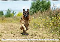 Deutsche Schäferhunde Unsere Graunasen (Wandkalender 2019 DIN A2 quer) - Produktdetailbild 8