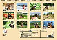 Deutsche Schäferhunde Unsere Graunasen (Wandkalender 2019 DIN A2 quer) - Produktdetailbild 13