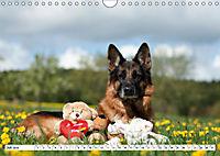 Deutsche Schäferhunde Unsere Graunasen (Wandkalender 2019 DIN A4 quer) - Produktdetailbild 7