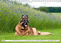 Deutsche Schäferhunde Unsere Graunasen (Wandkalender 2019 DIN A4 quer) - Produktdetailbild 6