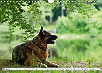 Deutsche Schäferhunde Unsere Graunasen (Wandkalender 2019 DIN A4 quer) - Produktdetailbild 3