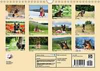 Deutsche Schäferhunde Unsere Graunasen (Wandkalender 2019 DIN A4 quer) - Produktdetailbild 13