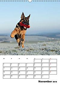 Deutsche Schäferhundwelpen zum Verlieben (Wandkalender 2019 DIN A3 hoch) - Produktdetailbild 11