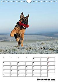 Deutsche Schäferhundwelpen zum Verlieben (Wandkalender 2019 DIN A4 hoch) - Produktdetailbild 11