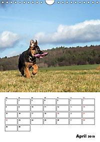 Deutsche Schäferhundwelpen zum Verlieben (Wandkalender 2019 DIN A4 hoch) - Produktdetailbild 4