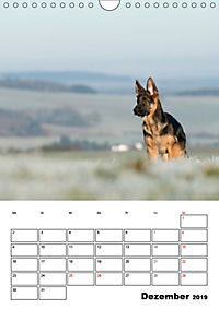 Deutsche Schäferhundwelpen zum Verlieben (Wandkalender 2019 DIN A4 hoch) - Produktdetailbild 12