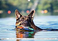 Deutscher Schäferhund - Der beste Freund des Menschen (Wandkalender 2019 DIN A3 quer) - Produktdetailbild 8
