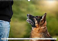 Deutscher Schäferhund - Der beste Freund des Menschen (Wandkalender 2019 DIN A3 quer) - Produktdetailbild 10
