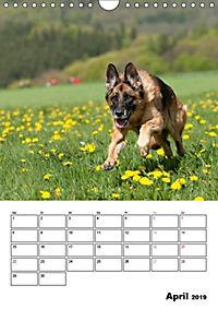 Deutscher Schäferhund - Der beste Freund des Menschen (Wandkalender 2019 DIN A4 hoch) - Produktdetailbild 4