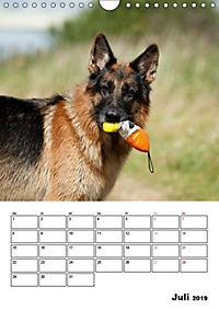 Deutscher Schäferhund - Der beste Freund des Menschen (Wandkalender 2019 DIN A4 hoch) - Produktdetailbild 7
